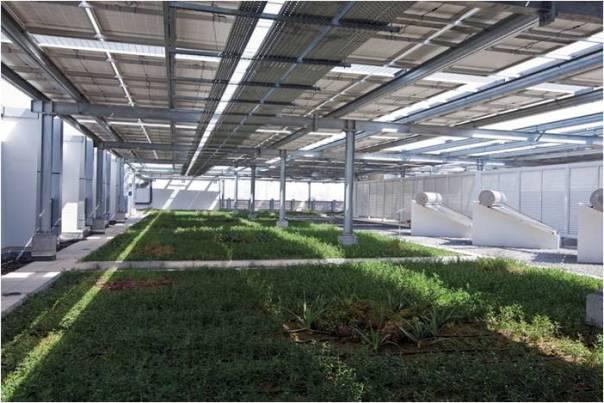 Roof of DEWA HQ in Dubai – LEED Platinum Building | Energy